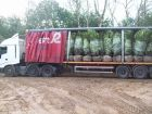 Some of the large Laurels arrive on site - two more lorries to go!
